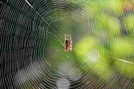 приснилась паутина с пауком