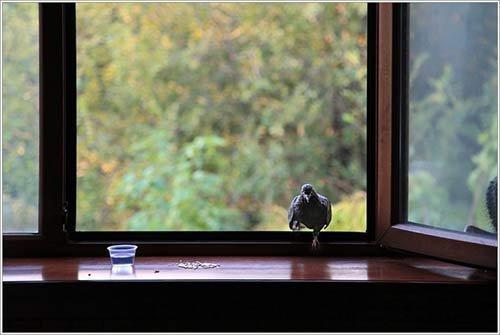 k-chemu-snitsya-ptica-v-okne