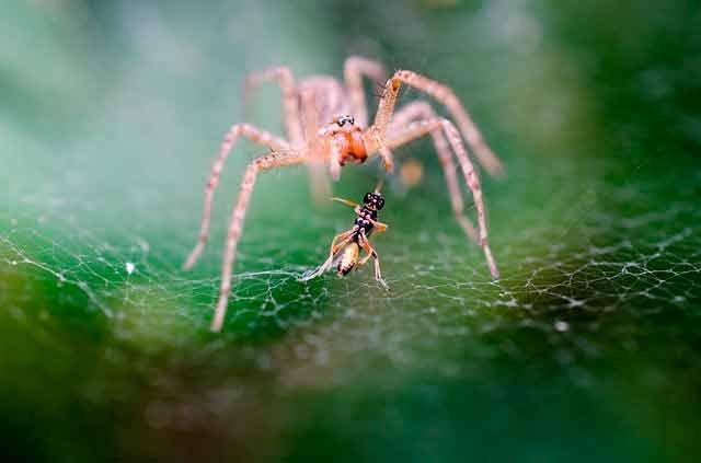 Действия пауков во сне