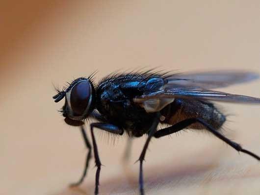 Большая муха во сне