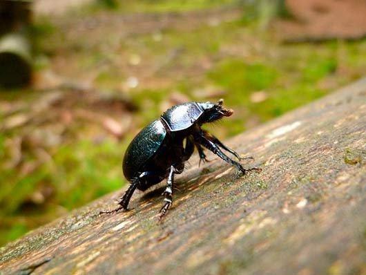 приснился жук