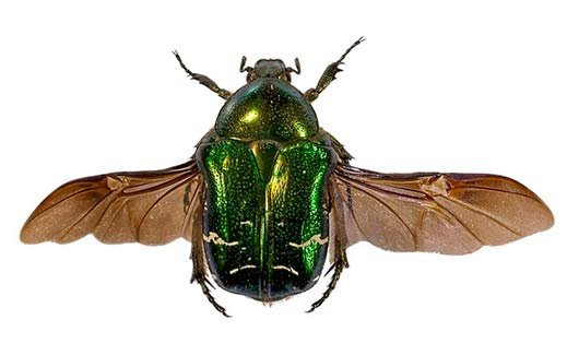 Сон жуки