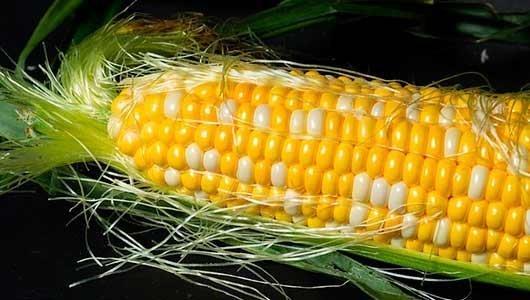 Рецепты кукурузы на зиму