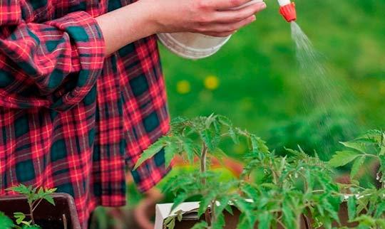 Подкормка томатов перекисью водорода
