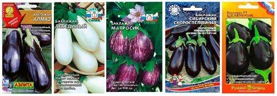 семена баклажан для посева