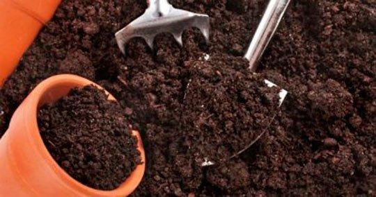 Почва для рассады баклажан
