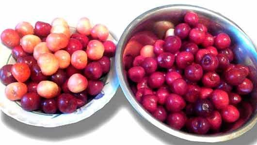 выбор ягод к варенью